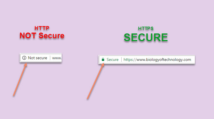 SSL Website Security - Why You Need It, from the Biology of Technology